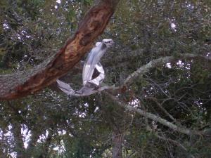 Debris in tree