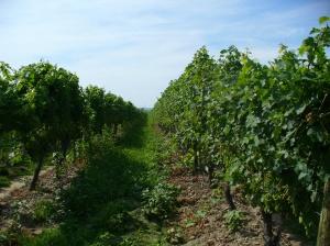 Peller vines
