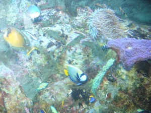 Fish & anemones