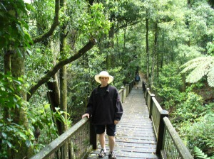 Rainforest walkway 2