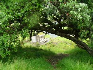 Track under big tree