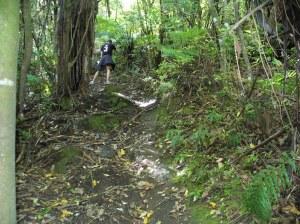 Maori Track