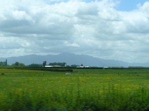 Farmland and Te Aroha